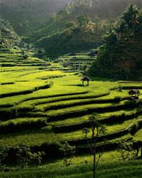 Rice Terraces & Pondoks, Bongkasa Karangasem, Bali