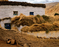 Harvest Wheat and House, Chosar