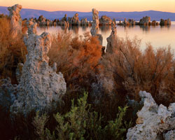 Tufa & Shrubs at Dawn, South Tufa Mono Lake, California