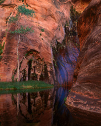 Arrowhead Pool, Seep & Cottonwood Escalante Wilderness, Utah
