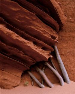Sandstone Fins and roots